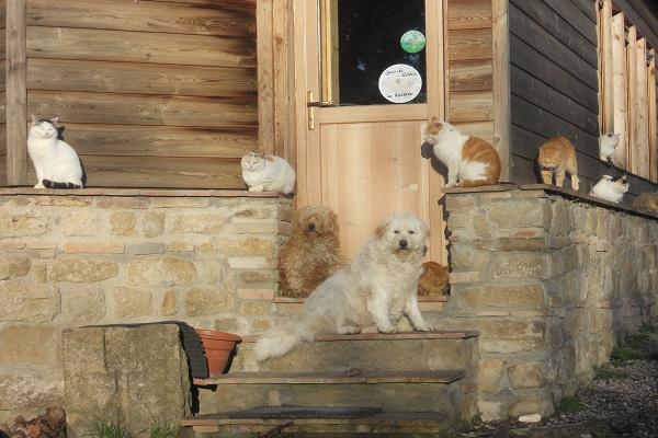 Cani e gatti all'agriturismo di Orazio
