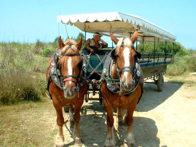 Passeggiate in carrozza per il parco di San Rossore